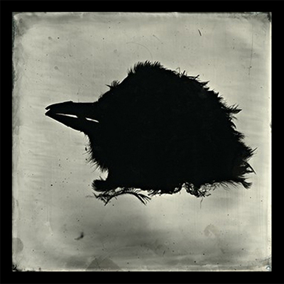 S. Gayle Stevens, Bird Head tintype