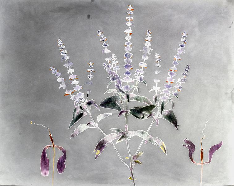 David Lebe, Garden 2, 1979, photogram