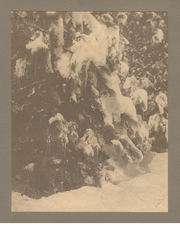 """Tree in snow, platinum print mounted on gray card, ca. 1897, signed on recto in pencil, 9.5 x 7.5"""""""