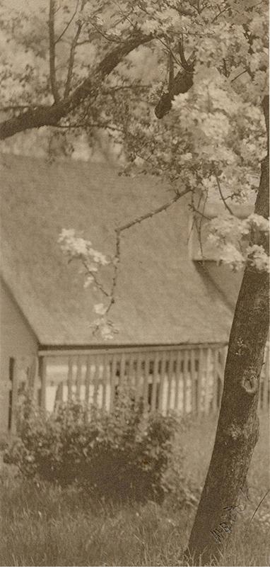 W.B.Post, Blossoming Tree