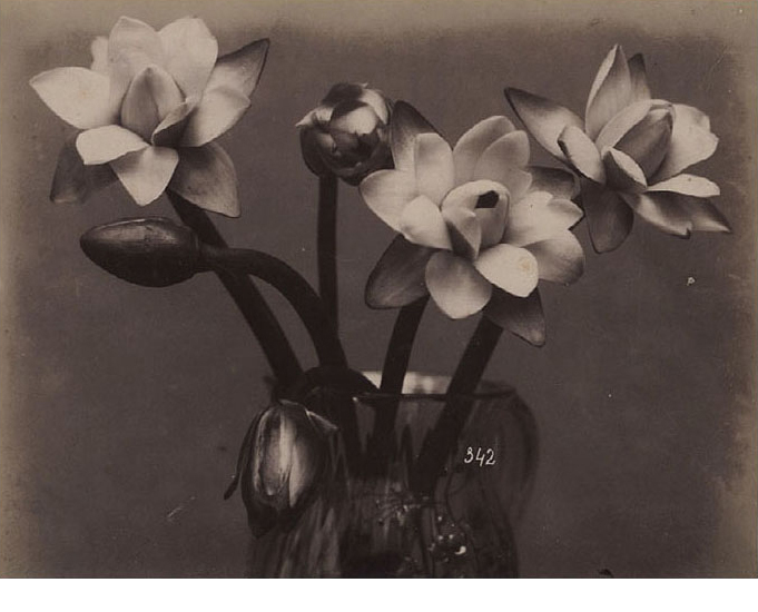 French Floral Study, c. 1870's