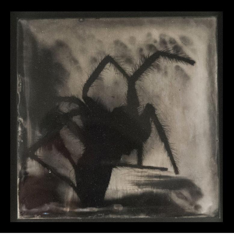 "S. Gayle Stevens, Arachne, 2011, Collodion on alluminum, 5 x 5"""